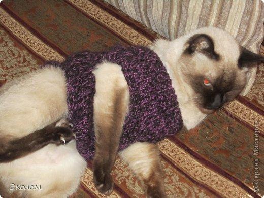 Кофточку связала для маленькой собачки на подарок. Очень надеюсь, что ему подойдёт))) Скоро примерим.....  фото 3