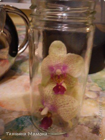 Добрый вечер жители СТРАНЫ МАСТЕРОВ! Сегодня хочу Вам представить МК по консервации цветов в растворе глицерина. Очень хочу, чтобы цветы радовали подольше!!! фото 3