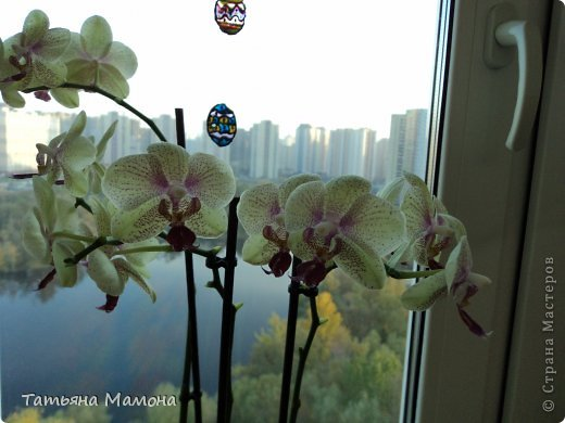 Добрый вечер жители СТРАНЫ МАСТЕРОВ! Сегодня хочу Вам представить МК по консервации цветов в растворе глицерина. Очень хочу, чтобы цветы радовали подольше!!! фото 6