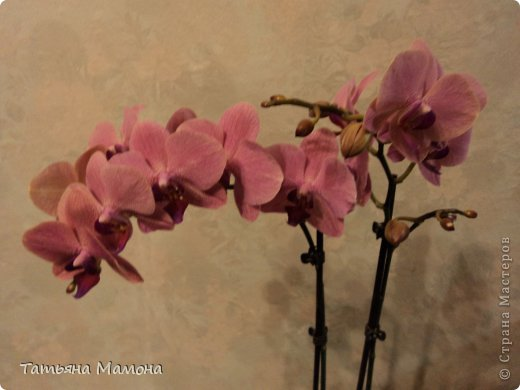 Орхидейка фото 6