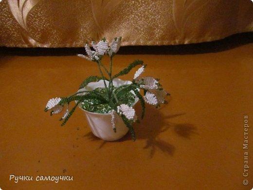Первые цветы.Подснежники.