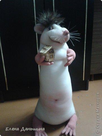 крыска глава семейства с мечтой о доме