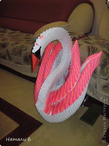 Лебедь Бумага фото 2