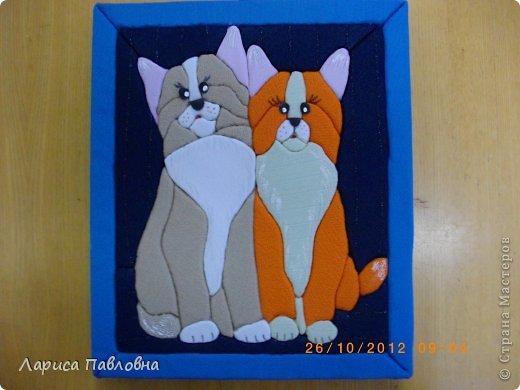 Мудрые коты фото 1