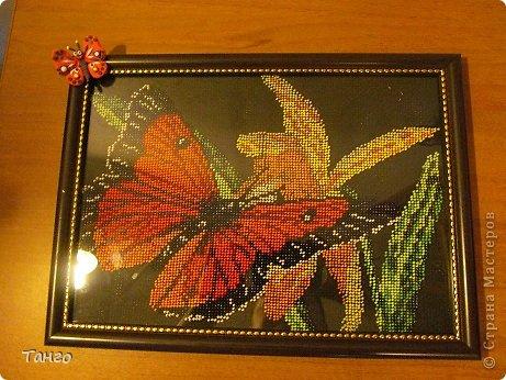бабочка и цветок фото 1