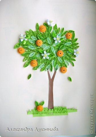 Апельсиновое дерево | Страна