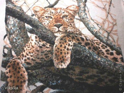 Вышивка крестом Леопард