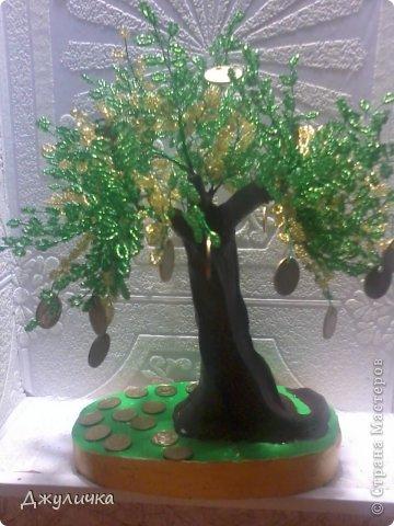 Денежное дерево, Вековой дуб фото 1