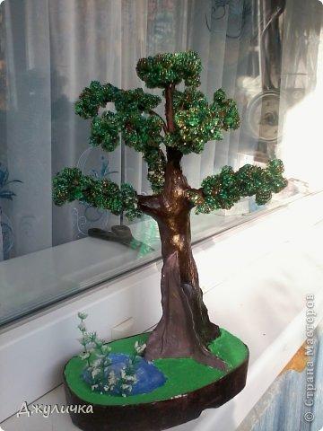 Денежное дерево, Вековой дуб фото 3
