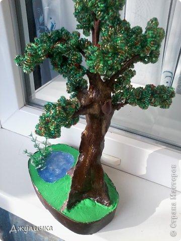 Денежное дерево, Вековой дуб фото 4