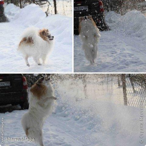 Зимние забавы Чипа фото 4
