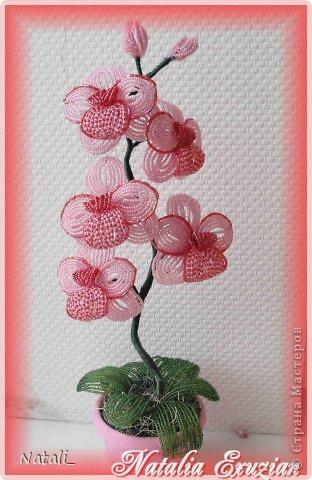 """Орхидея-12. """" Мир Бисера.com"""