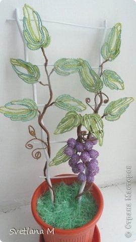 Поделка изделие Бисероплетение Виноградная лоза Бисер Бусинки Гипс Нитки Проволока фото 2.