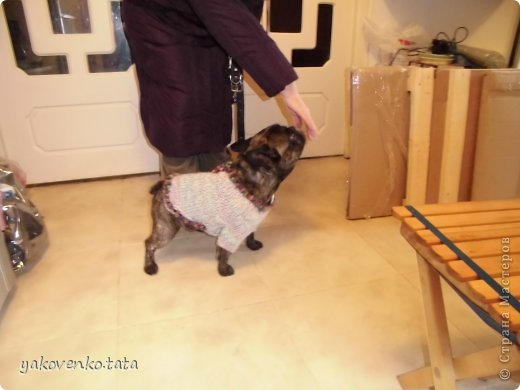 в(В)от пришлось попробовать утеплить собачку(,) вроде получилось(,) а как судить вам(.) н(Н)о песик доволен(,) хозяйке тоже нравится(,) а мне приятно(.) фото 1