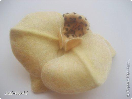 Фиалки, орхидея фото 8