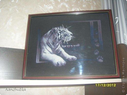 Тигр на черной канве, вышила его очень быстро.. буквально за месяц))) Обожаю его фото 1