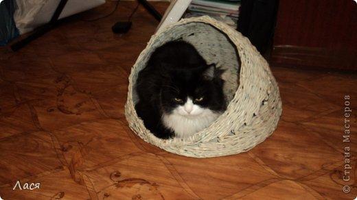 Это начало процесса, кот не давал делать, оккупировал сразу ))) фото 3
