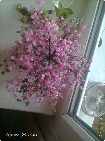 Дерево (Китайская Вишня) фото 2