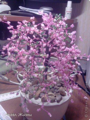 Дерево (Китайская Вишня) фото 1