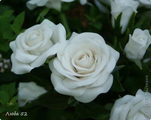 Белые розы!  фото 3