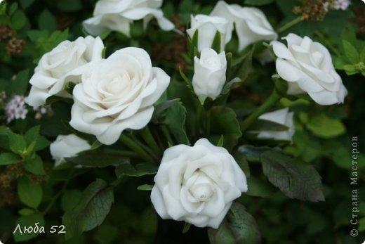 Белые розы!  фото 2
