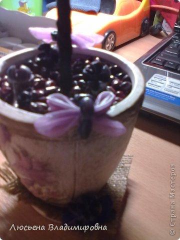 Топиари из кофе фото 3
