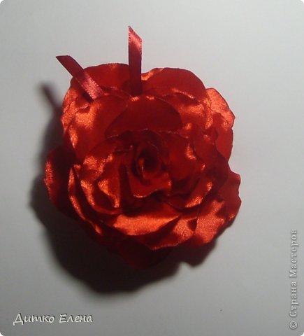 Цветы фото 3
