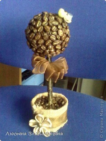 Топиари из кофе фото 1