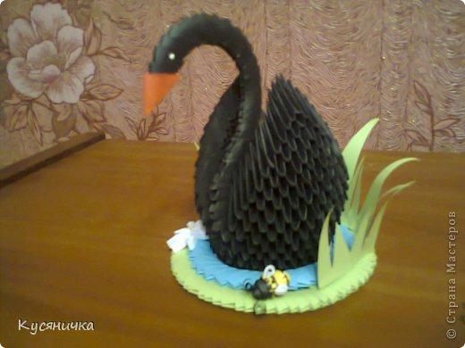 Черный лебедь | Страна