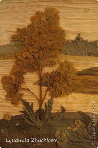 Картина панно рисунок Праздник осени Аппликация флористика Осенний пейзаж Материал природный фото 14