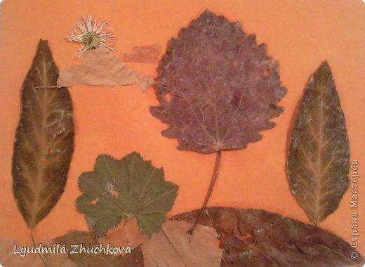 Картина панно рисунок Праздник осени Аппликация флористика Осенний пейзаж Материал природный фото 3