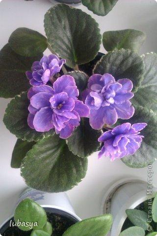 Вот, наконец-то,  в моем кофейном саду пополнение. фото 6