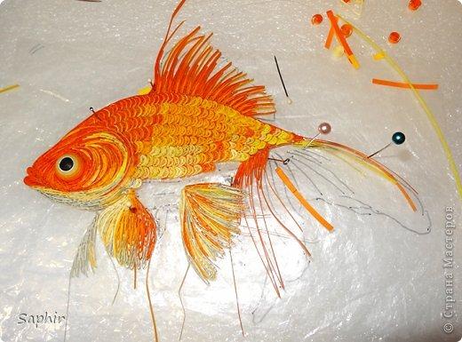 Золотая рыбка.  фото 6