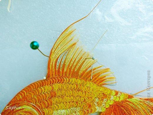 Золотая рыбка.  фото 8