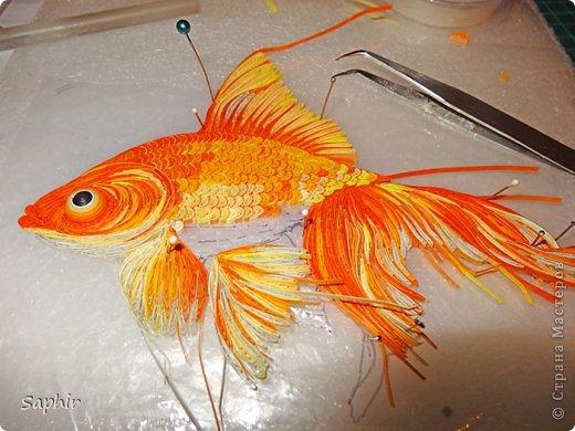 Золотая рыбка.  фото 9