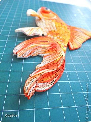 Золотая рыбка.  фото 13