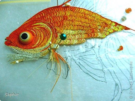 Золотая рыбка.  фото 4