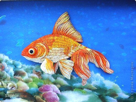 Золотая рыбка.  фото 17