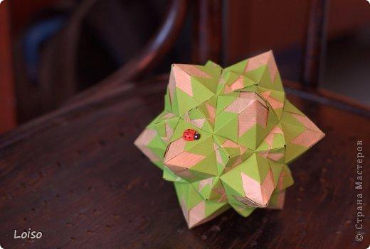 Ну вот, успела... интернет только что появился, ура!!! :)))))))))))))) На моем Сигнуме поселилась бабочка-коробочка фото 5