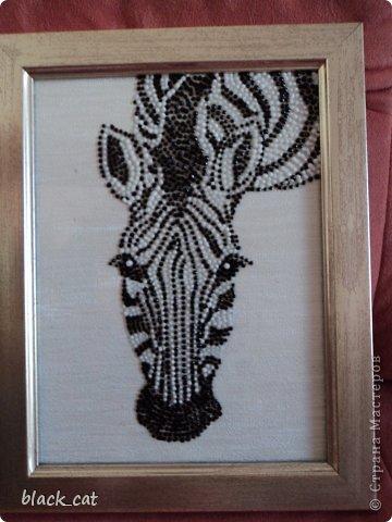 Рисунок контурными красками Марабу на стекле  фото 2