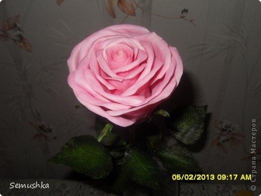 Всем привет!!!!!!!! Хочу показать вам чем закончилась моя попытка слепить голландскую розу.......  Кажется получился гибрид какой-то)))))