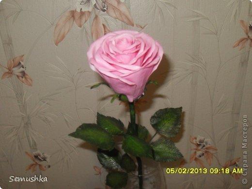 Всем привет!!!!!!!! Хочу показать вам чем закончилась моя попытка слепить голландскую розу.......  Кажется получился гибрид какой-то))))) фото 3
