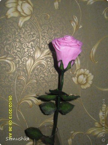 Всем привет!!!!!!!! Хочу показать вам чем закончилась моя попытка слепить голландскую розу.......  Кажется получился гибрид какой-то))))) фото 2