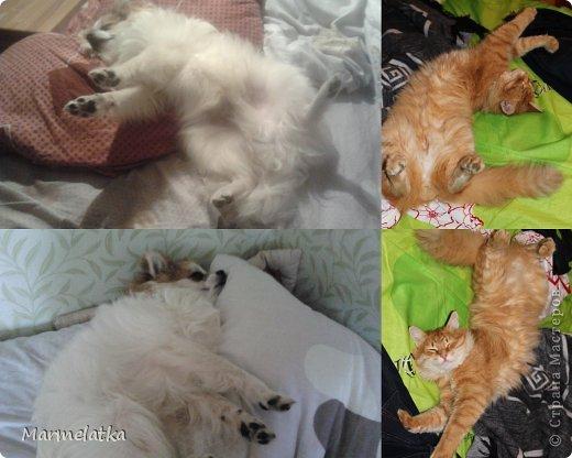 Вот так мы спим! вся кровать занята!
