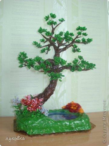 Оно растет в живописном месте у небольшого озерца, берущего свое начало у крохотного родника у камней.