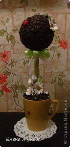 кофейное деревце фото 4