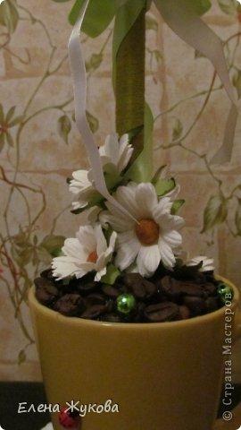 кофейное деревце фото 5