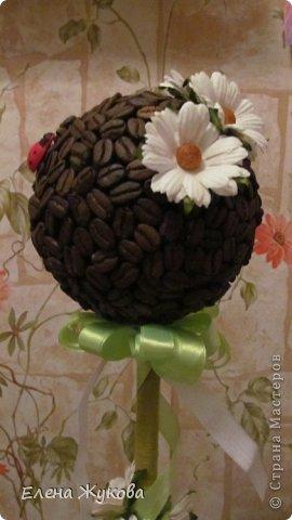 кофейное деревце фото 6