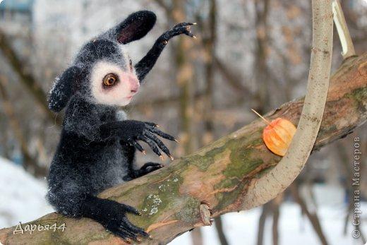 Бу-у-у!) Мадагаскарская руконожка или руконожка