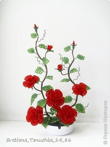 Как сохранить саженцы роз до высадки 44